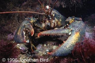 The Wonders of the Seas: Arthropods