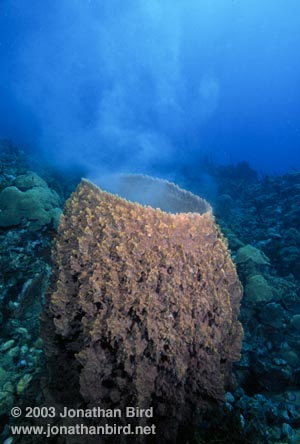 The Wonders of the Seas: Sponges