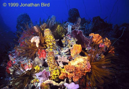 Beneath The Caribbean